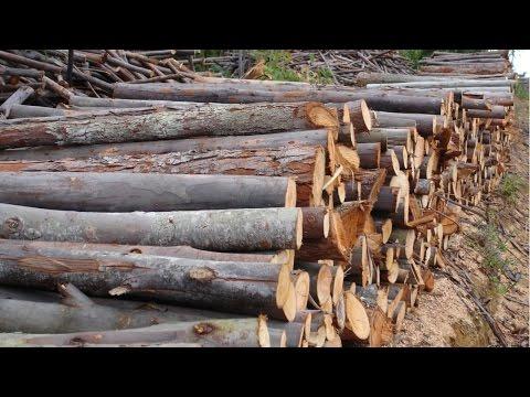 Clique e veja o vídeo Curso Cultivo de Eucalipto em Pequenas Propriedades