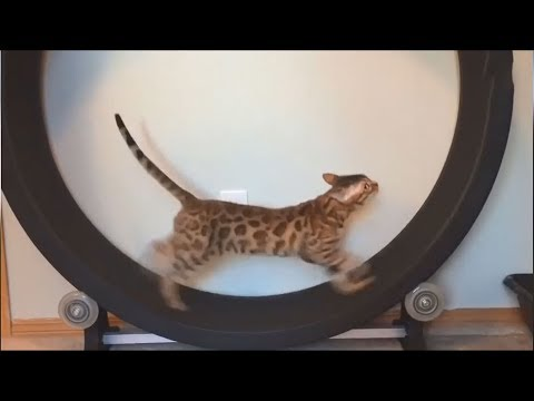 Funny Cat Videos For Kids to Watch Try Not To Laugh - Funny Animals