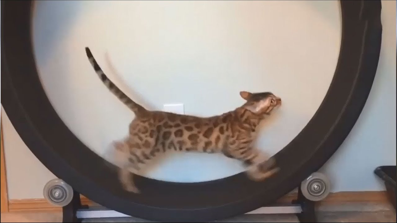 Funny Cat Videos For Kids To Watch Try Not To Laugh Funny Animals