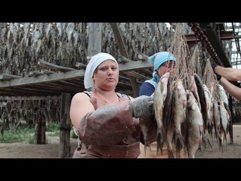 Вяленая Рыба по Астрахански. Как правильно сушить, солить, вялить рыбу. Плотва, Окунь, Таранка