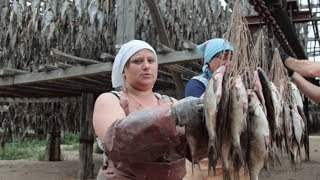 Вяленая Рыба по Астрахански. Как правильно сушить,...