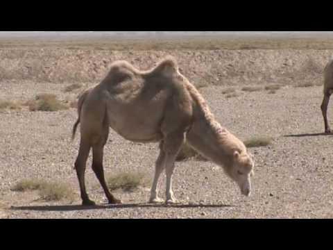 Desert Documentary HD - Takla Makan desert