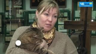 Охранники музеев: в Чернигове живут кошка-историк и кошка-художник