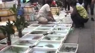 KC北京遊記-十里河花鳥市場