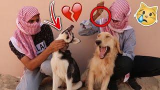 اختطاف كلبي روكي ولوسي وانا نايم من قبل مجرمين !! شوفوا كيف