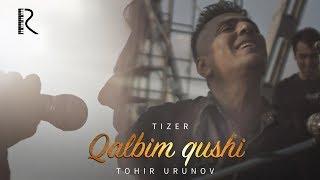 Tohir Urunov - Qalbim qushi (tizer)   Тохир Урунов - Калбим куши (тизер)