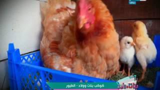 بنات وولاد : تعرف على أهم صفات الطيور في كوكب الأرض