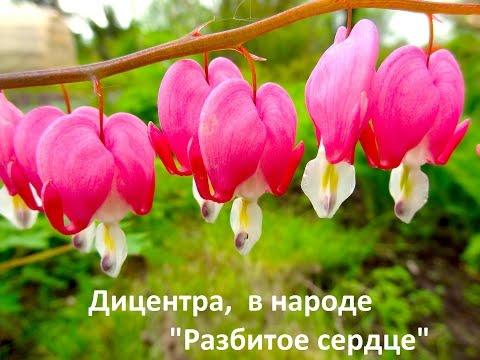 Цветы полевые с названиями смотреть Часть01