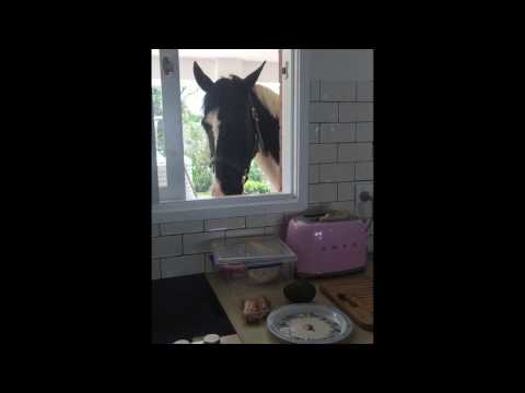 Cheeky horse stealing toast from Smeg toaster