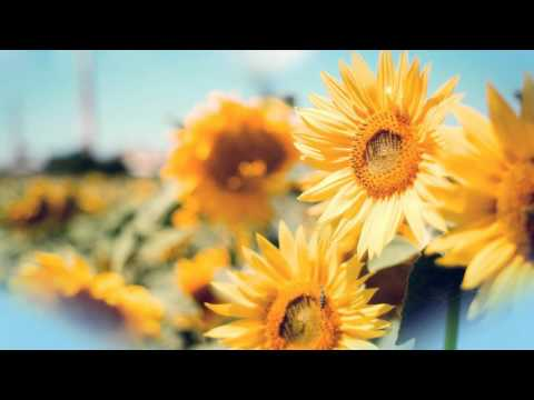 Beautiful flowers background wallpapers download