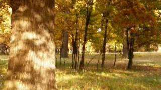 Достопримечательности Луганщины.(Дубовая роща в Кременном видео 2010 года., 2010-10-26T08:38:15.000Z)