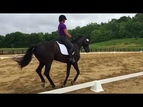 Holly Linz riding Sonnet 05/13/18