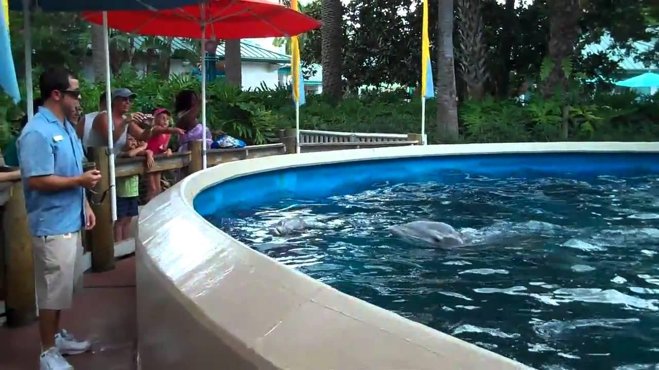 Sea World Orlando Dolphin Nursery