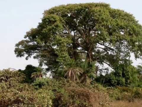 The Travel Village Presents Senegal