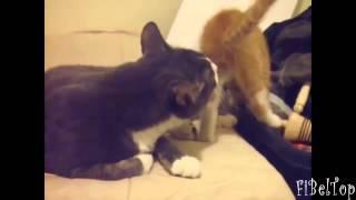 Смешные морды кошек и собак. Забавные животные_FKrsEbURxSvbCOnzfnMAdtWEkbvgPjlD