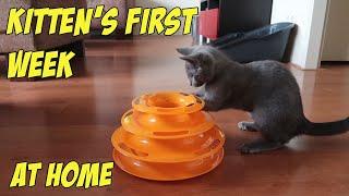 MEET MY NEW RUSSIAN BLUE KITTEN!
