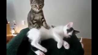 Самые смешные видео про котов  01