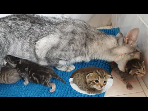 Maternal love and instinct of the touching mother cat.