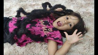 JULIA encontrou uma ARANHA em casa - Julia and the Giant Spider !!!