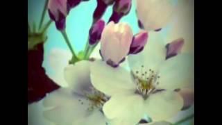 『SAKURA』 vocal 法月康平 Music by Sayuri Fukui Lryics by Sayuri Fu...