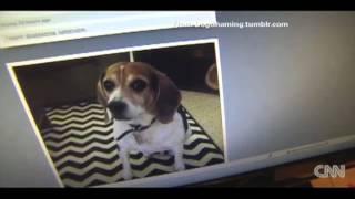 Gambar cover DogShaming - Dog Shaming - Funny Story & Pics to go with it! Dogshaming.com Bulldog Puppy