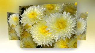 Фото осенних цветов.Слайд шоу