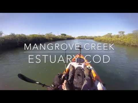 Bundaberg Estuary Cod Creek Fishing On Dragon Kayak