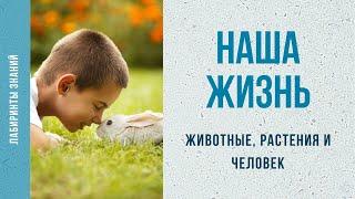 Животные, растения и человек - Лабиринты Знаний