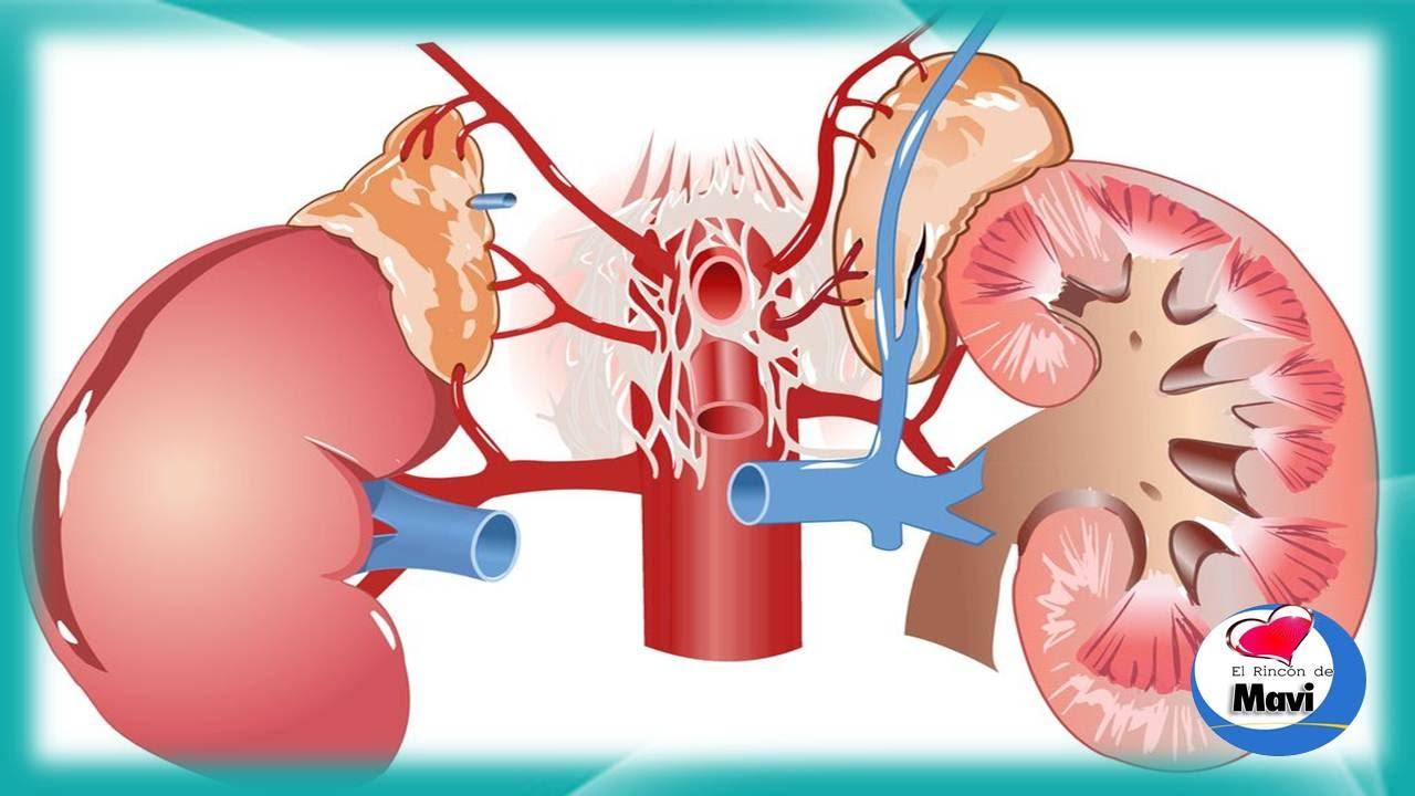 Factores que afectan los riñones y la diabetes.