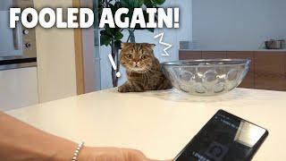 I Fooled My Cats All Day Long! | Kittisaurus