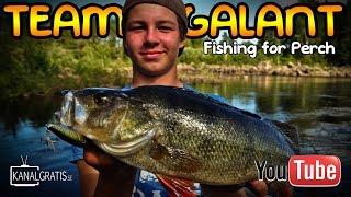 Fun Perch Fishing in Sweden | Team Galant (English subtitles)