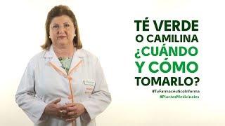 Té verde o camilina, cuándo y cómo tomarlo - #TuFarmacéuticoInforma