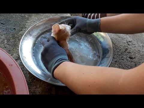 길고양이 새끼 목욕시키기