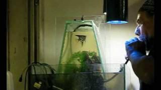 Vac-pumpless inverted aquarium