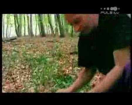 Alf Poier beim Schwammerlsuchen