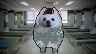 군대 기상나팔 강아지 리믹스