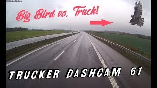 Trucker Dashcam #61 Big Bird vs. Truck!!