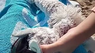 видео Пляжний відпочинок