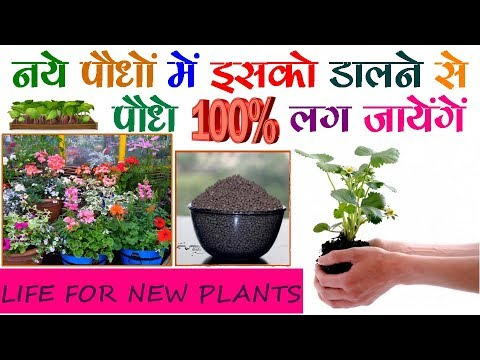 ये है 'BABY FOOD' छोटे और नन्हे पौधों के लिए || 'Baby Food' for Young and Small Plants