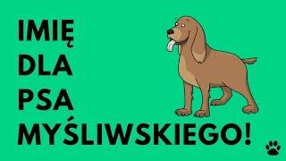 Imię Dla Psa Myśliwskiego - 40 TOP Imion!!! | Imionowo
