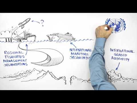 What Are the High Seas? Why Do They Need Help? | A Whiteboard Explainer
