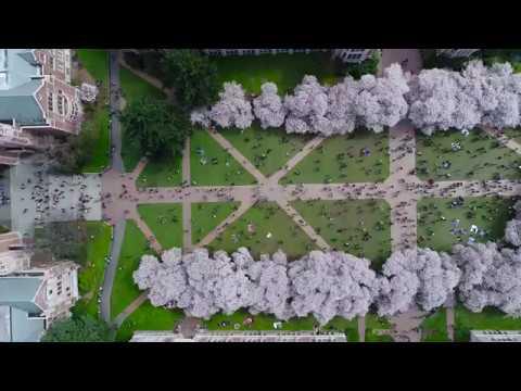 The University of Washington Cinematography