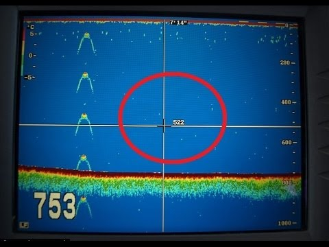 Sonar Image Reveals Possible Loch Ness Monster