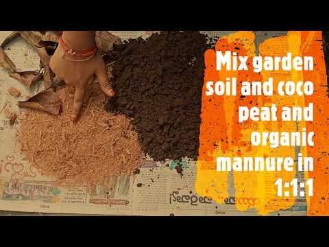 Download How make coco peat at home ll Marhashi ll grow your food