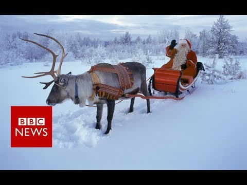 How do Reindeer Survive in the Arctic?  - BBC News