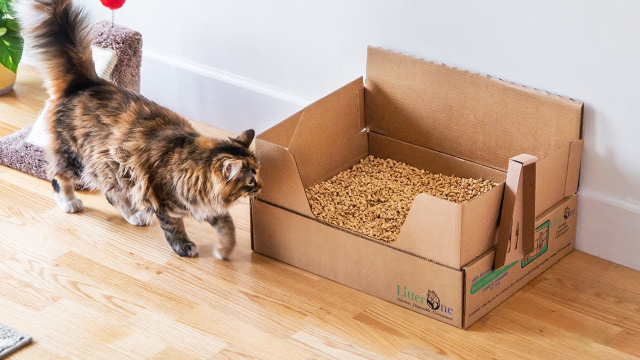 Self Contained Natural Cat Litter By Litter One The Grommet