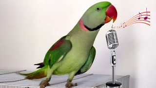 Talking Parrot Singing And Dancing - FUNNY BIRDS COMPLILATION