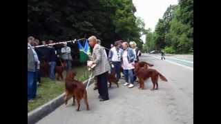 Московская выставка охотничьих собак 2014. Ирландские сеттеры. Чемпионы2