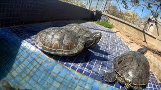 ¡¡El despertar de mis tortugas!!🐢💪