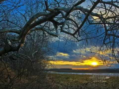 Ken Dalgarno's  Crooked Trees of Alticane